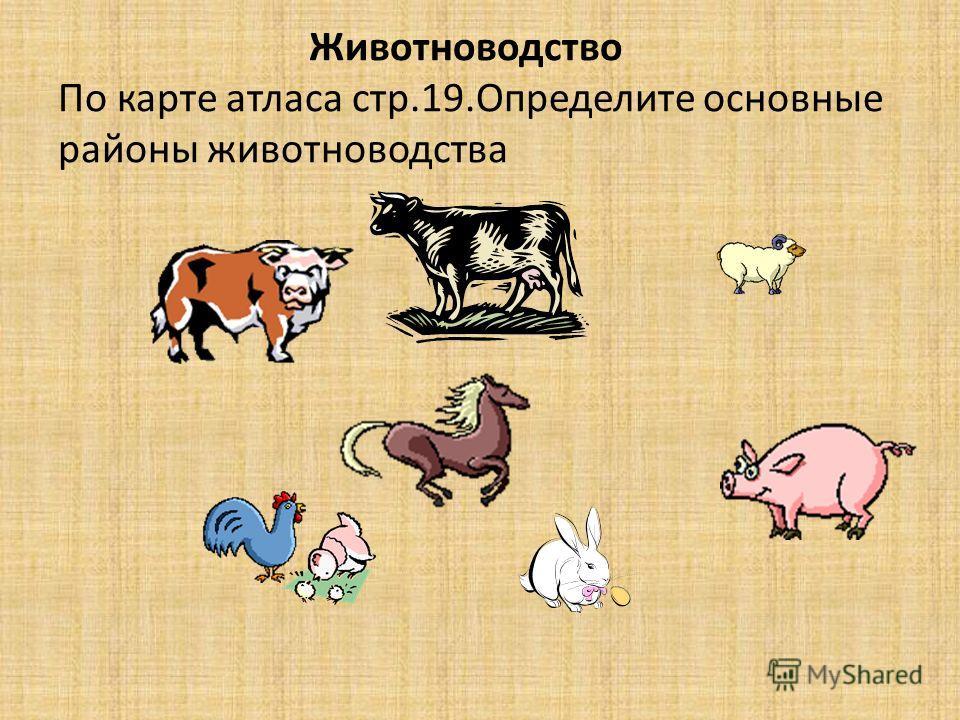 Животноводство По карте атласа стр.19. Определите основные районы животноводства