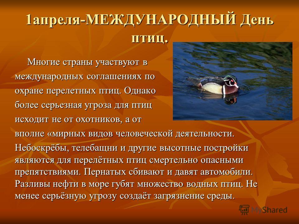 1 апреля-МЕЖДУНАРОДНЫЙ День птиц. Многие страны участвуют в Многие страны участвуют в международных соглашениях по охране перелетных птиц. Однако более серьезная угроза для птиц исходит не от охотников, а от вполне «мирных видов человеческой деятельн