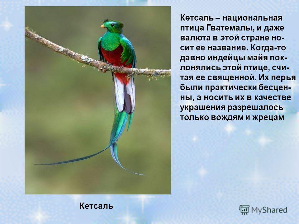 Кетсаль Кетсаль – национальная птица Гватемалы, и даже валюта в этой стране но- сит ее название. Когда-то давно индейцы майя пок- лонялись этой птице, счи- тая ее священной. Их перья были практически бесцен- ны, а носить их в качестве украшения разре