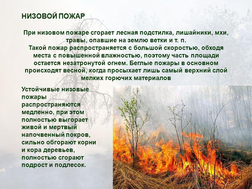 НИЗОВОЙ ПОЖАР При низовом пожаре сгорает лесная подстилка, лишайники, мхи, травы, опавшие на землю ветки и т. п. Такой пожар распространяется с большой скоростью, обходя места с повышенной влажностью, поэтому часть площади остается незатронутой огнем