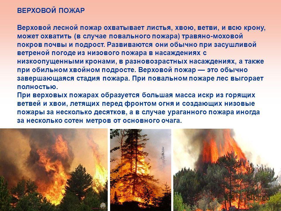 ВЕРХОВОЙ ПОЖАР Верховой лесной пожар охватывает листья, хвою, ветви, и всю крону, может охватить (в случае повального пожара) травяно-моховой покров почвы и подрост. Развиваются они обычно при засушливой ветреной погоде из низового пожара в насаждени