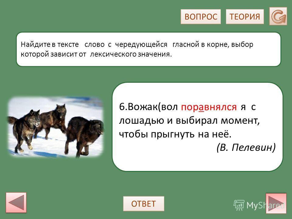 6.Вожак(волк) поравнялся с лошадью и выбирал момент, чтобы прыгнуть на неё. (В. Пелевин) Найдите в тексте слово с чередующейся гласной в корне, выбор которой зависит от лексического значения. поравнялся