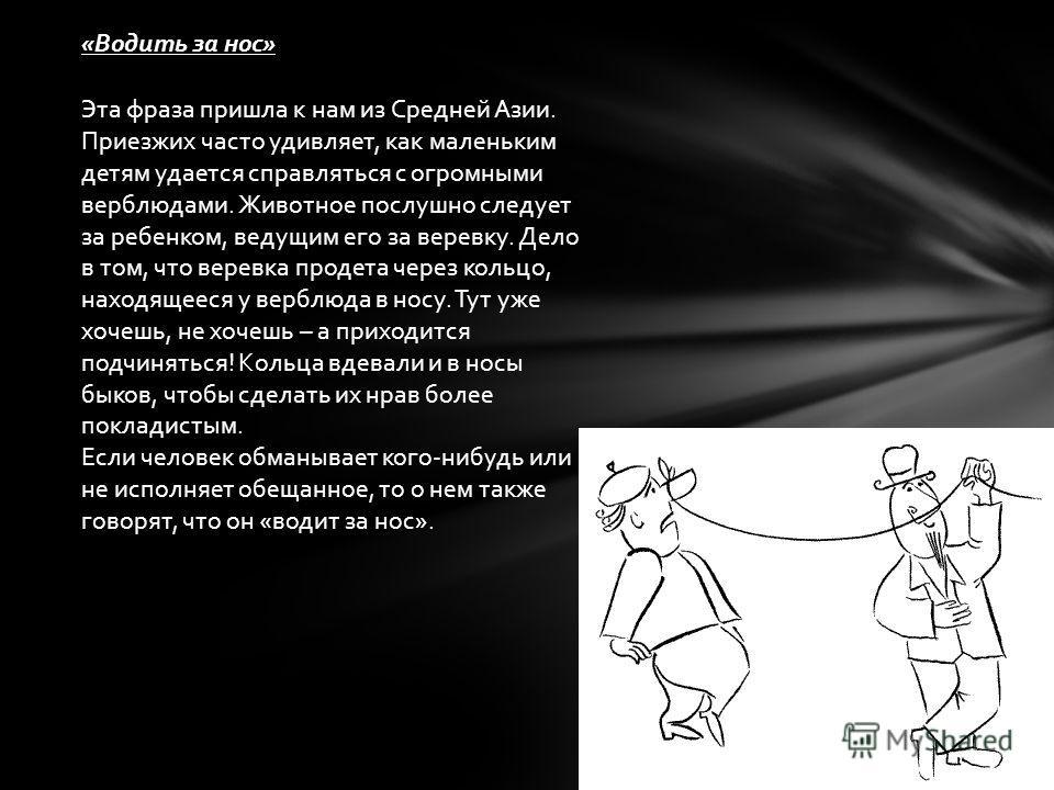«Водить за нос» Эта фраза пришла к нам из Средней Азии. Приезжих часто удивляет, как маленьким детям удается справляться с огромными верблюдами. Животное послушно следует за ребенком, ведущим его за веревку. Дело в том, что веревка продета через коль