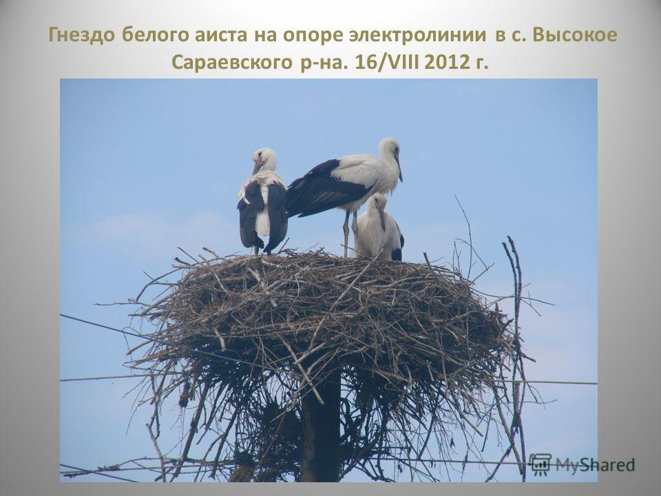 Гнездо белого аиста на опоре электролинии в с. Высокое Сараевского р-на. 16/VIII 2012 г.