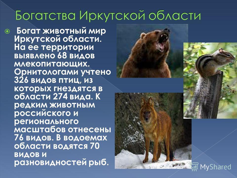 Богат животный мир Иркутской области. На ее территории выявлено 68 видов млекопитающих. Орнитологами учтено 326 видов птиц, из которых гнездятся в области 274 вида. К редким животным российского и регионального масштабов отнесены 76 видов. В водоемах