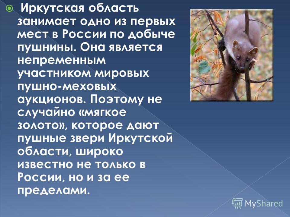 Иркутская область занимает одно из первых мест в России по добыче пушнины. Она является непременным участником мировых пушно-меховых аукционов. Поэтому не случайно «мягкое золото», которое дают пушные звери Иркутской области, широко известно не тольк