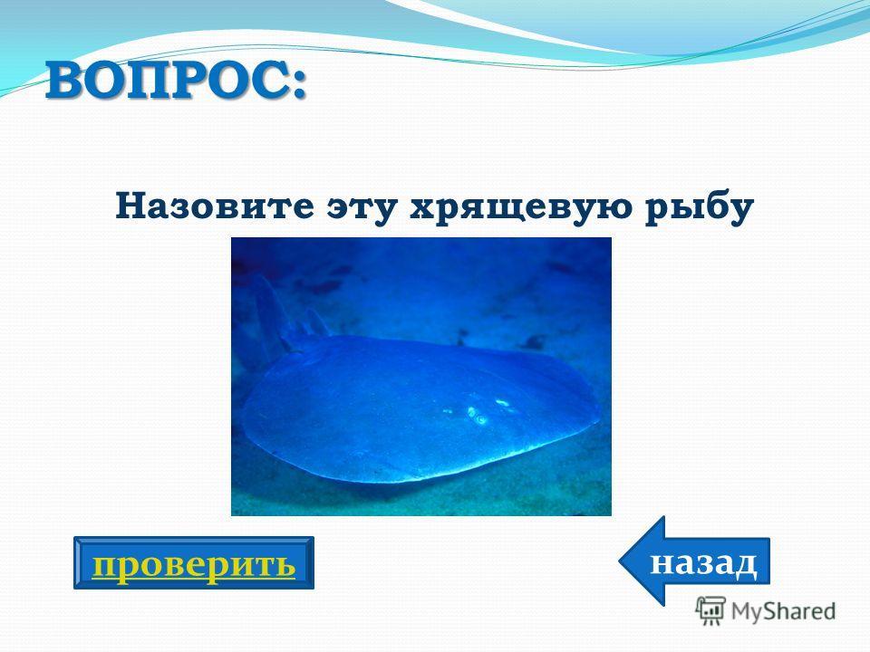 ВОПРОС: Назовите эту хрящевую рыбу назад проверить
