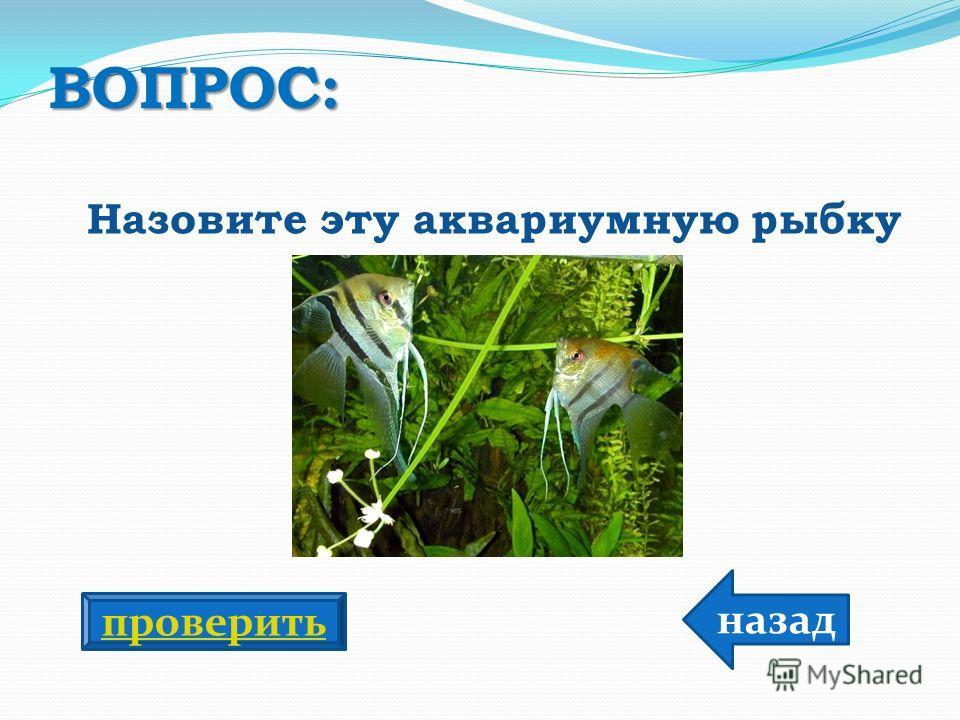 ВОПРОС: Назовите эту аквариумную рыбку назад проверить