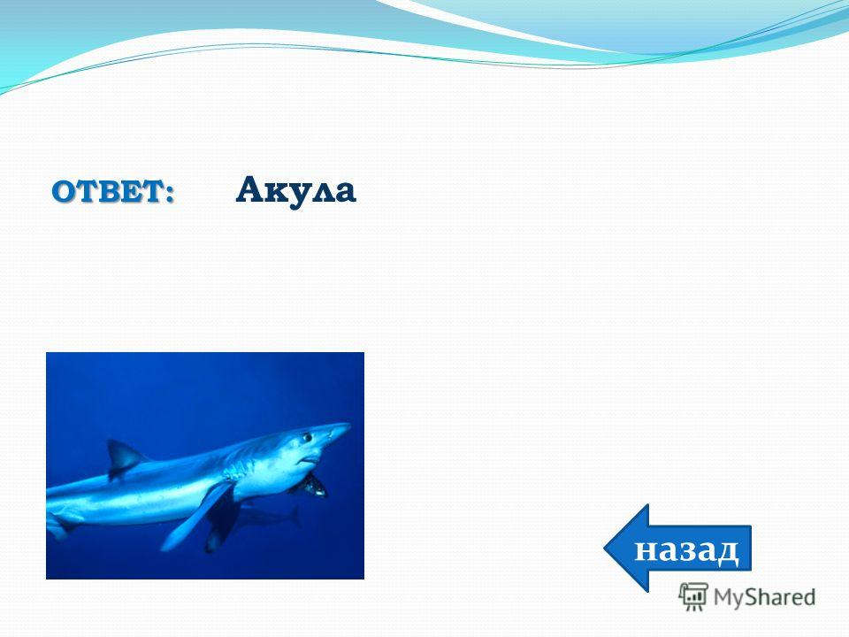 ОТВЕТ: ОТВЕТ: Акула назад