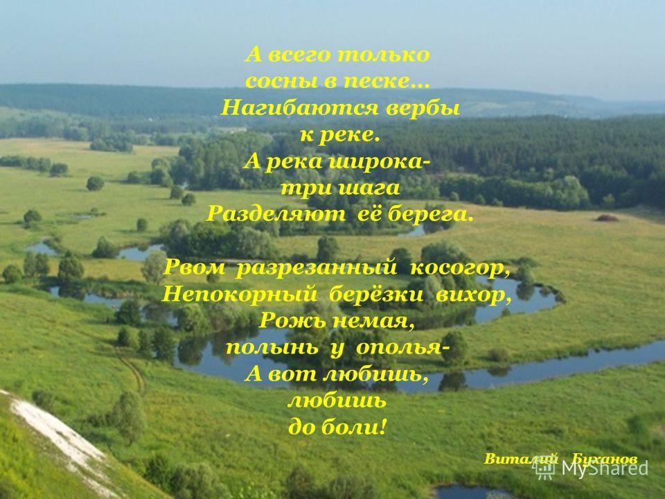 А всего только сосны в песке… Нагибаются вербы к реке. А река широка- три шага Разделяют её берега. Рвом разрезанный косогор, Непокорный берёзки вихор, Рожь немая, полынь у ополья- А вот любишь, любишь до боли! Виталий Буханов