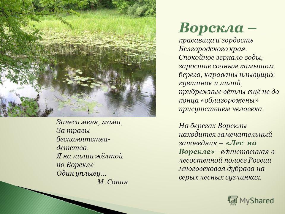 Ворскла – красавица и гордость Белгородского края. Спокойное зеркало воды, заросшие сочным камышом берега, караваны плывущих кувшинок и лилий, прибрежные вётлы ещё не до конца «облагорожены» присутствием человека. На берегах Ворсклы находится замечат