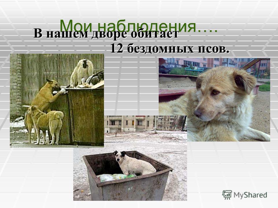 Мои наблюдения…. В нашем дворе обитает В нашем дворе обитает 12 бездомных псов. 12 бездомных псов.