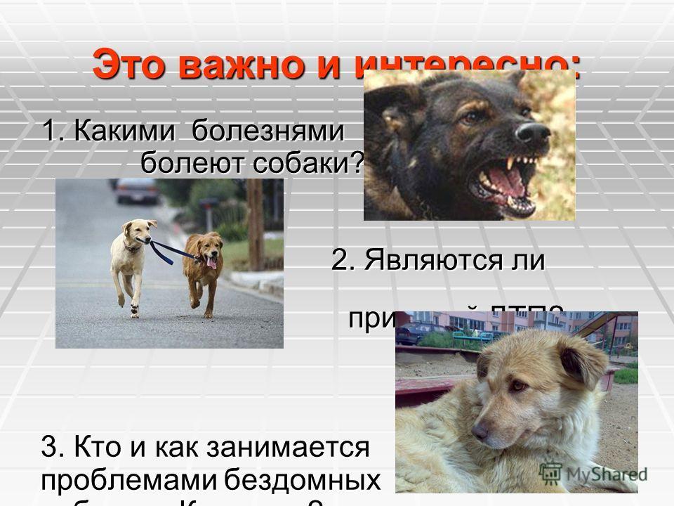 Это важно и интересно: 1. Какими болезнями болеют собаки? болеют собаки? 2. Являются ли собаки 2. Являются ли собаки причиной ДТП? причиной ДТП? 3. Кто и как занимается проблемами бездомных собак в г. Карасуке?