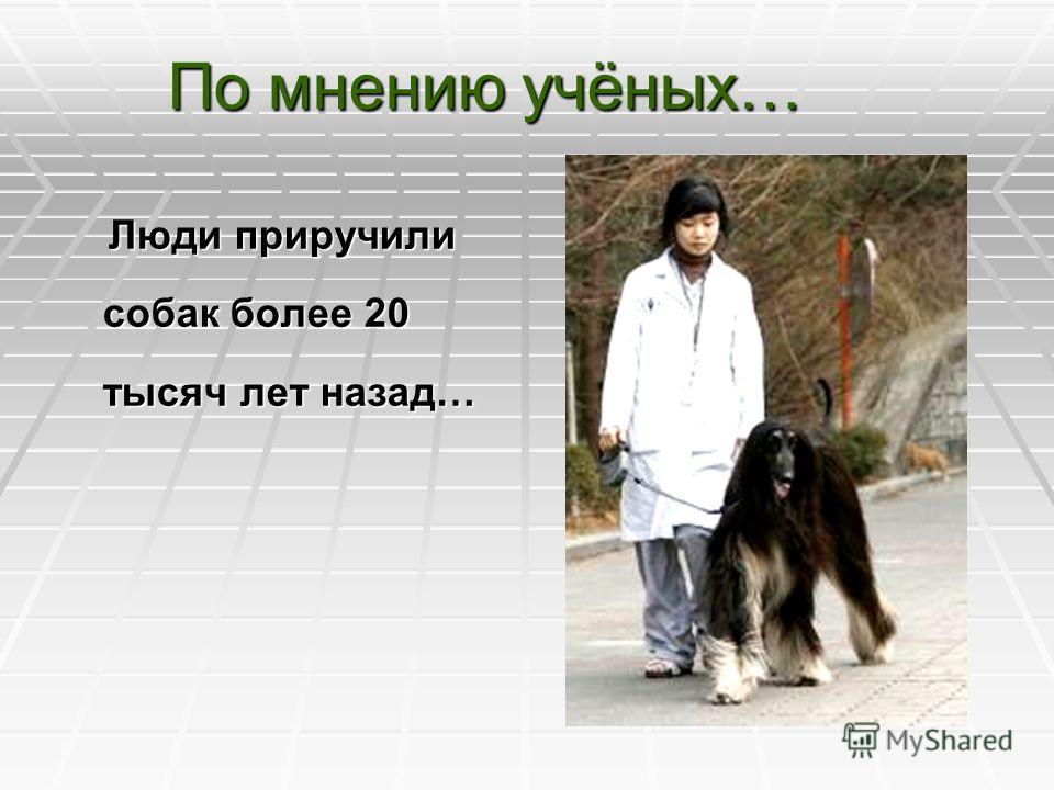 По мнению учёных… Люди приручили собак более 20 тысяч лет назад… Люди приручили собак более 20 тысяч лет назад…