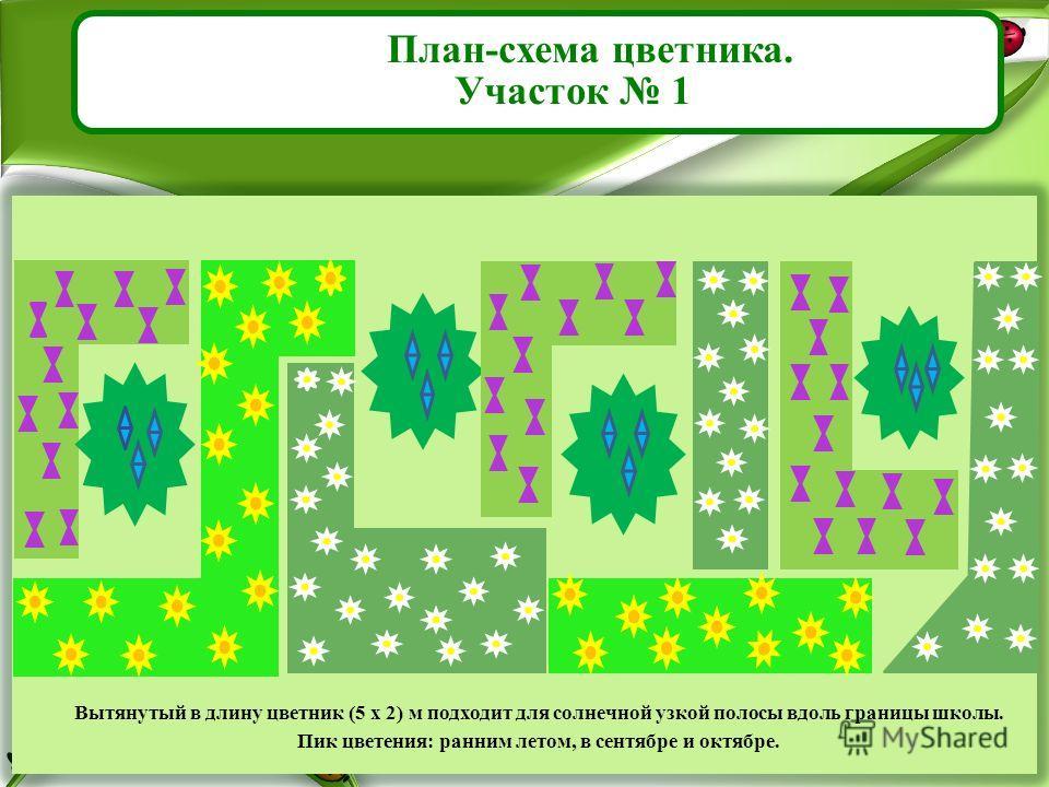План-схема цветника. Участок 1 Вытянутый в длину цветник (5 x 2) м подходит для солнечной узкой полосы вдоль границы школы. Пик цветения: ранним летом, в сентябре и октябре.