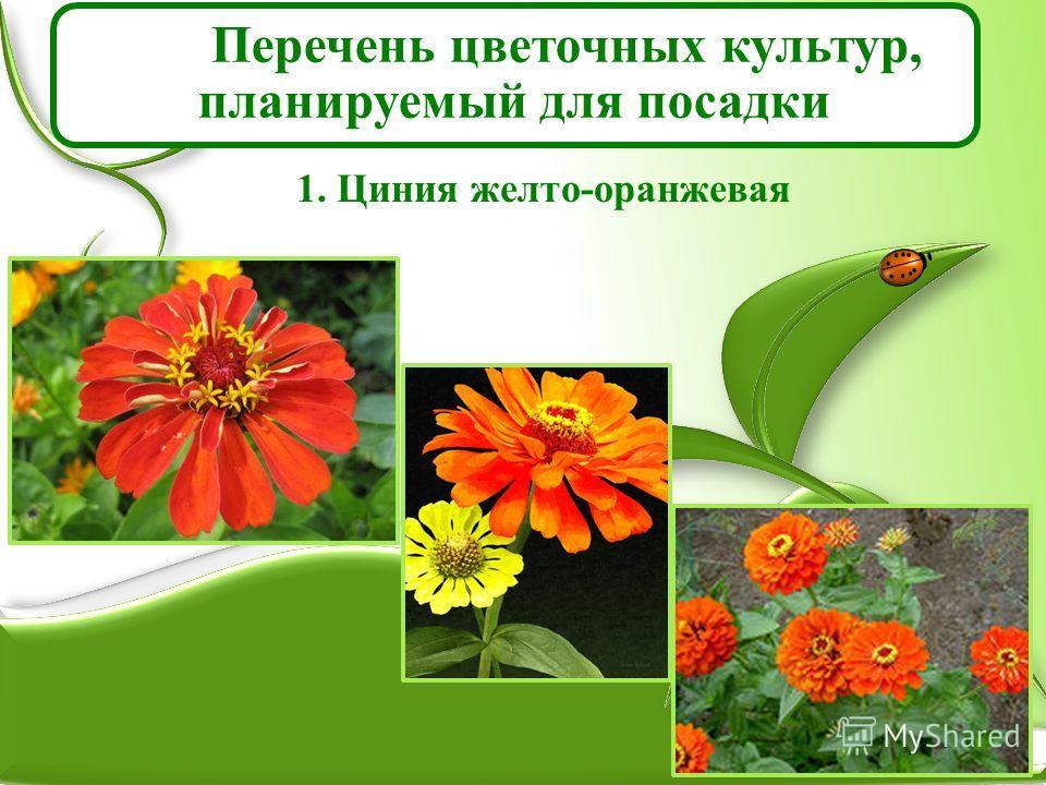 Перечень цветочных культур, планируемый для посадки 1. Циния желто-оранжевая