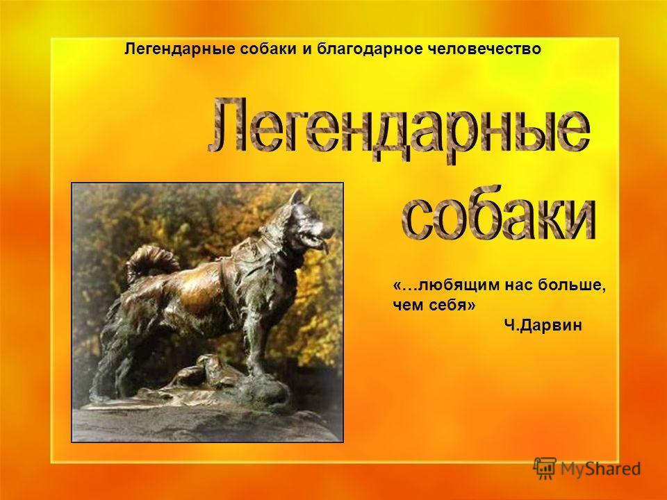 Легендарные собаки и благодарное человечество «…любящим нас больше, чем себя» Ч.Дарвин