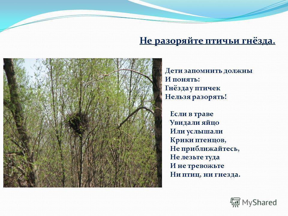 Не разоряйте птичьи гнёзда. Дети запомнить должны И понять: Гнёзда у птичек Нельзя разорять! Если в траве Увидали яйцо Или услышали Крики птенцов, Не приближайтесь, Не лезьте туда И не тревожьте Ни птиц, ни гнезда.