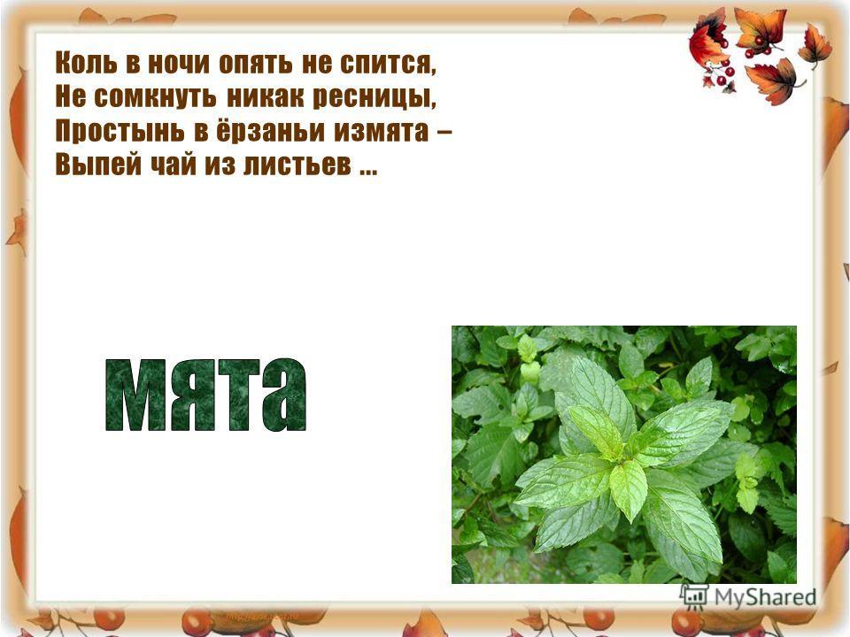 Коль в ночи опять не спится, Не сомкнуть никак ресницы, Простынь в ёрзаньи измята – Выпей чай из листьев...