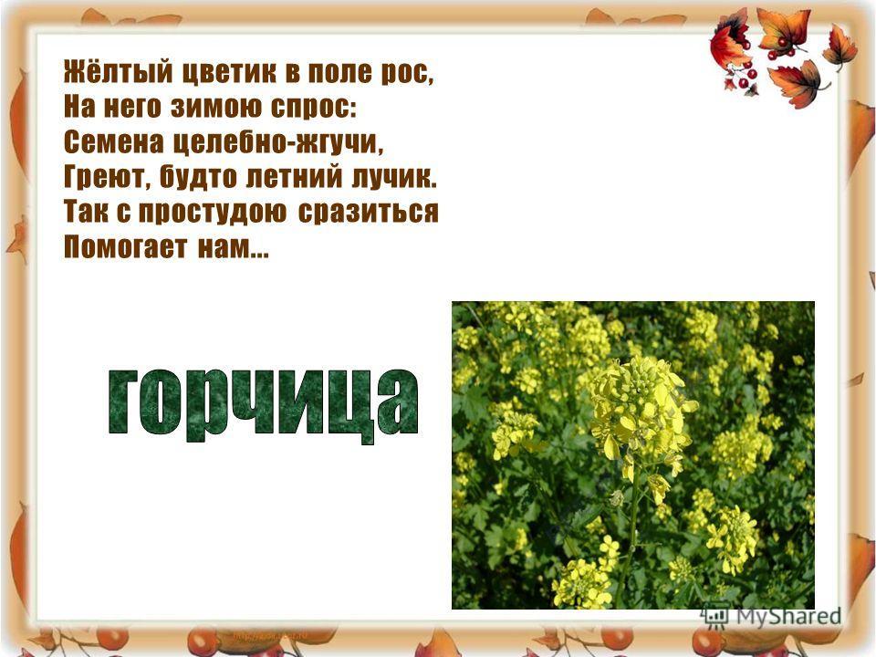 Жёлтый цветик в поле рос, На него зимою спрос: Семена целебно-жгучи, Греют, будто летний лучик. Так с простудою сразиться Помогает нам...