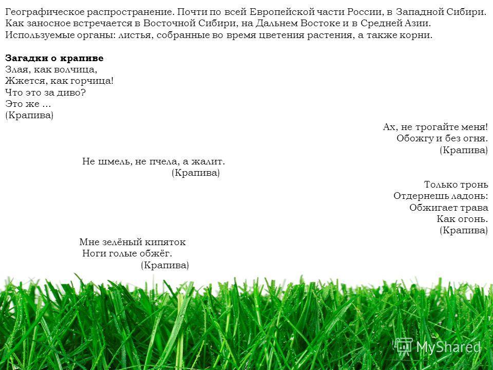 77 Географическое распространение. Почти по всей Европейской части России, в Западной Сибири. Как заносное встречается в Восточной Сибири, на Дальнем Востоке и в Средней Азии. Используемые органы: листья, собранные во время цветения растения, а также