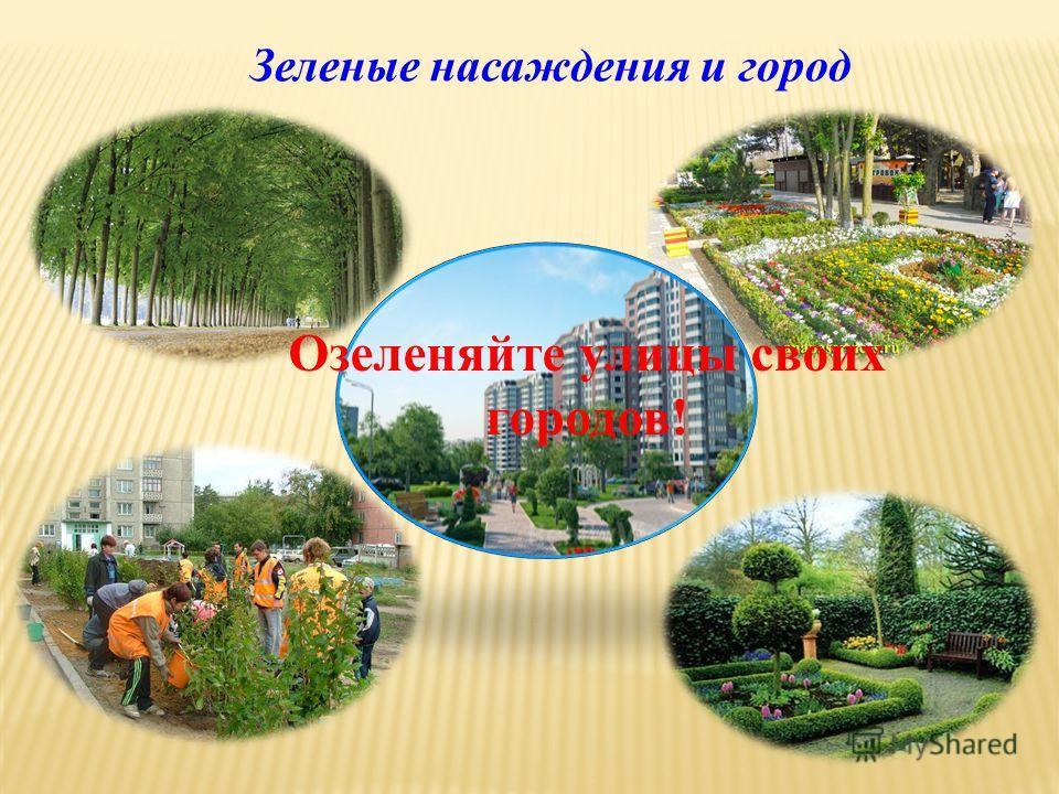 Зеленые насаждения и город Озеленяйте улицы своих городов!