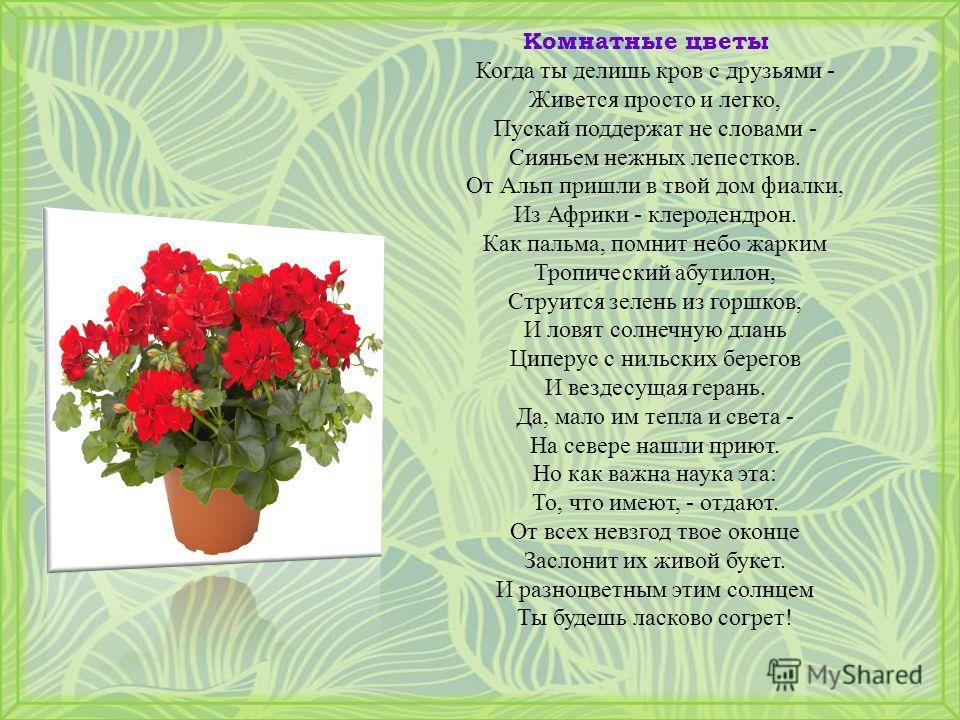 Комнатные цветы Когда ты делишь кров с друзьями - Живется просто и легко, Пускай поддержат не словами - Сияньем нежных лепестков. От Альп пришли в твой дом фиалки, Из Африки - клеродендрон. Как пальма, помнит небо жарким Тропический абутилон, Струитс