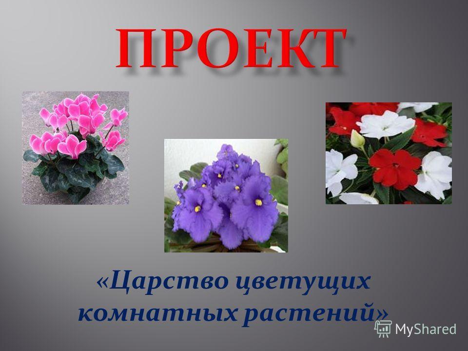 «Царство цветущих комнатных растений»