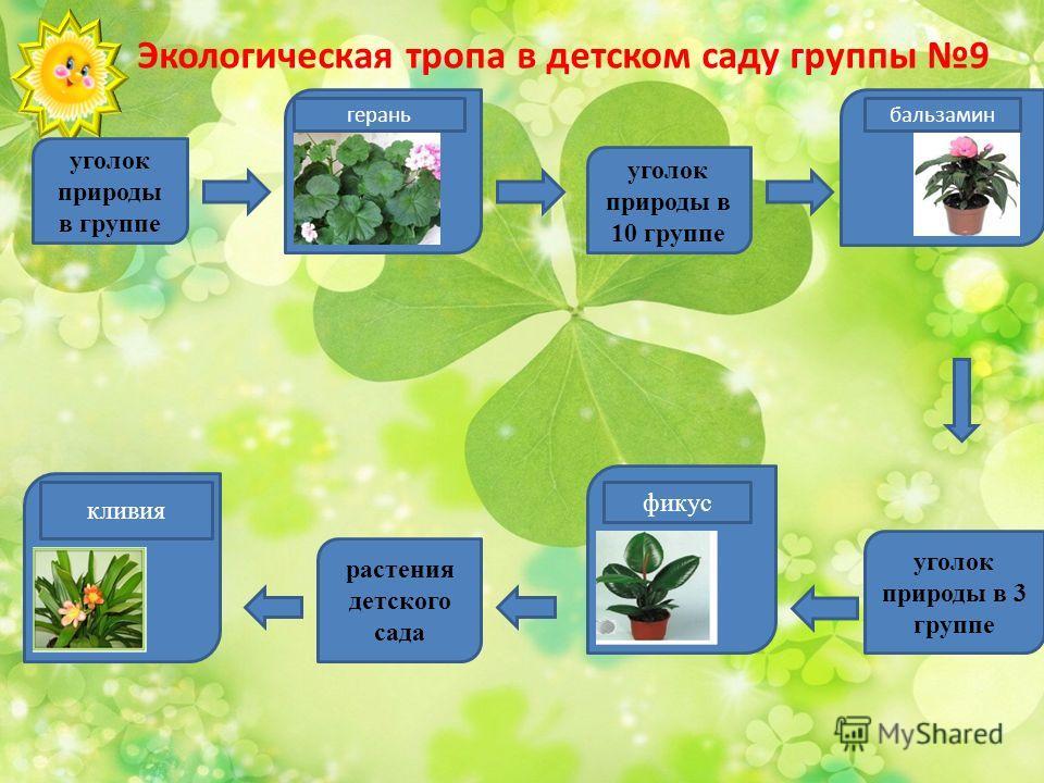 Экологическая тропа в детском саду группы 9 уголок природы в группе уголок природы в 3 группе растения детского сада уголок природы в 10 группе гераньбальзамин кливия фикус