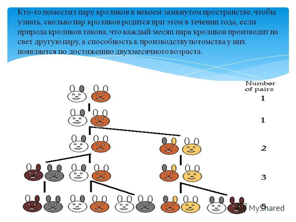 Кто-то поместил пару кроликов в некоем замкнутом пространстве, чтобы узнать, сколько пар кроликов родится при этом в течении года, если природа кроликов такова, что каждый месяц пара кроликов производит на свет другую пару, а способность к производст