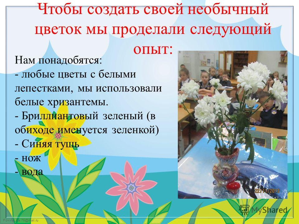 FokinaLida.75@mail.ru Чтобы создать своей необычный цветок мы проделали следующий опыт: Нам понадобятся: - любые цветы с белыми лепестками, мы использовали белые хризантемы. - Бриллиантовый зеленый (в обиходе именуется зеленкой) - Синяя тушь - нож -