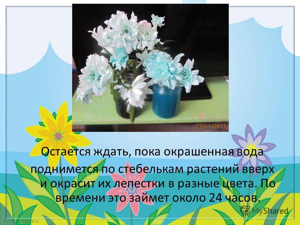 FokinaLida.75@mail.ru Остается ждать, пока окрашенная вода поднимется по стебелькам растений вверх и окрасит их лепестки в разные цвета. По времени это займет около 24 часов.