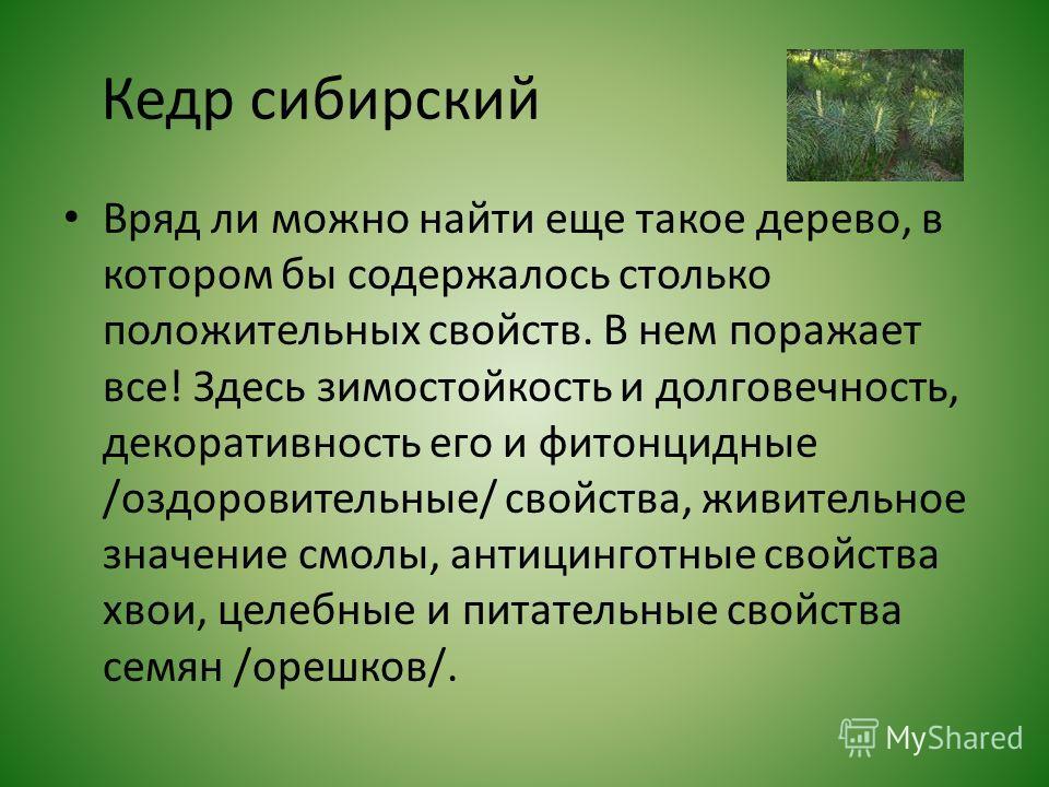 Кедр сибирский Вряд ли можно найти еще такое дерево, в котором бы содержалось столько положительных свойств. В нем поражает все! Здесь зимостойкость и долговечность, декоративность его и фитонцидные /оздоровительные/ свойства, живительное значение см
