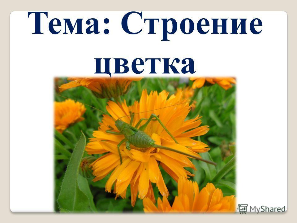 Тема: Строение цветка