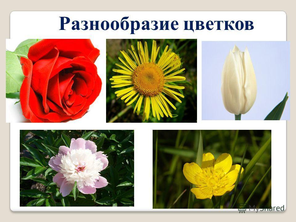 Разнообразие цветков