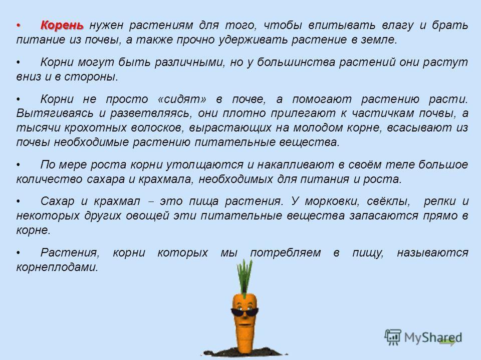 Корень Корень нужен растениям для того, чтобы впитывать влагу и брать питание из почвы, а также прочно удерживать растение в земле. Корни могут быть различными, но у большинства растений они растут вниз и в стороны. Корни не просто «сидят» в почве, а