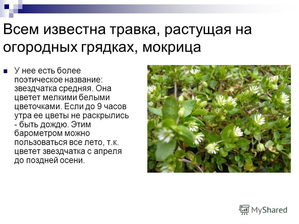Какие растения предсказывают погоду? Растения – барометры предсказывают погоду безошибочно. Внимательно наблюдая за растениями можно и без помощи синоптиков знать погоду на завтра, а то и на ближайшие день – два. Ботаникам на сегодняшний день известн