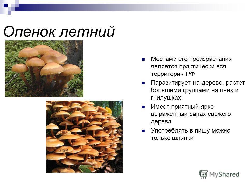 Масленок обыкновенный или настоящий Вкусный и легко переваривается Встретить его можно в сосновых и смешанных лесах европейской части России, Кавказа, Сибири и Дальнего Востока Также любит лесные поляны и опушки, встречается вдоль дорог и на горах