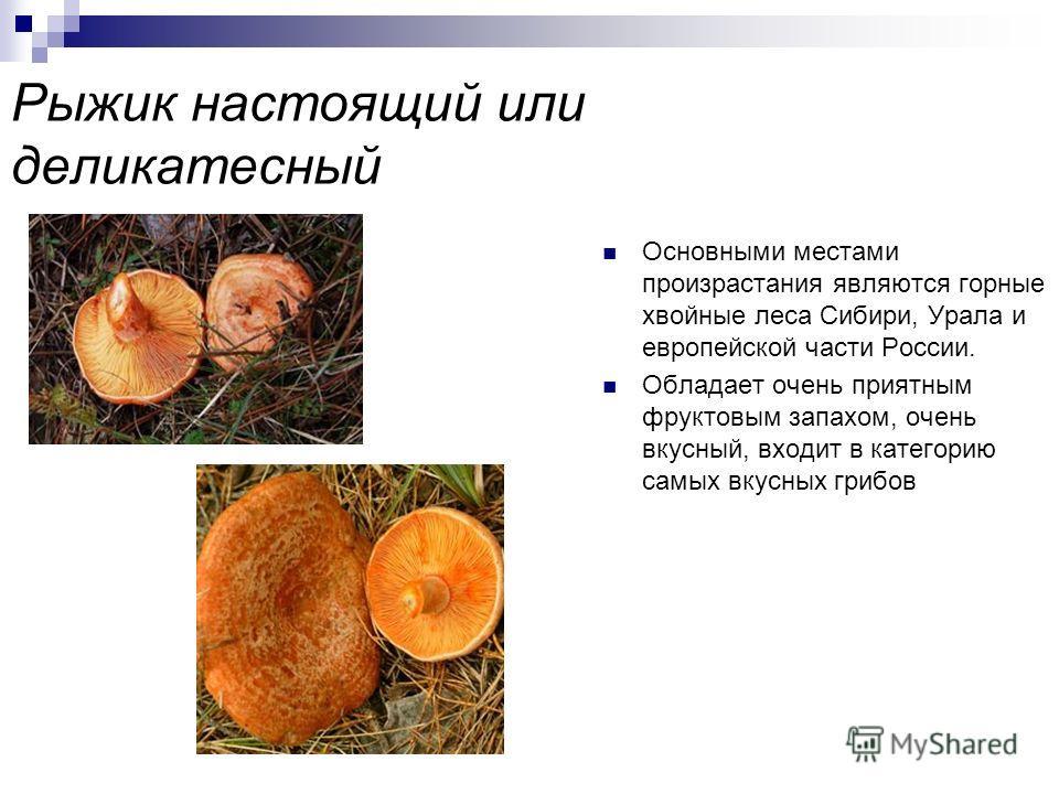Гриб подосиновик красный Очень вкусный гриб, который можно встретить в лесах европейской части России, на Урале, в Западной Сибири и Приморском крае Предпочтение отдаёт соседству с осиной, но найти его можно и под сосной, дубом и березой Имеет ещё и