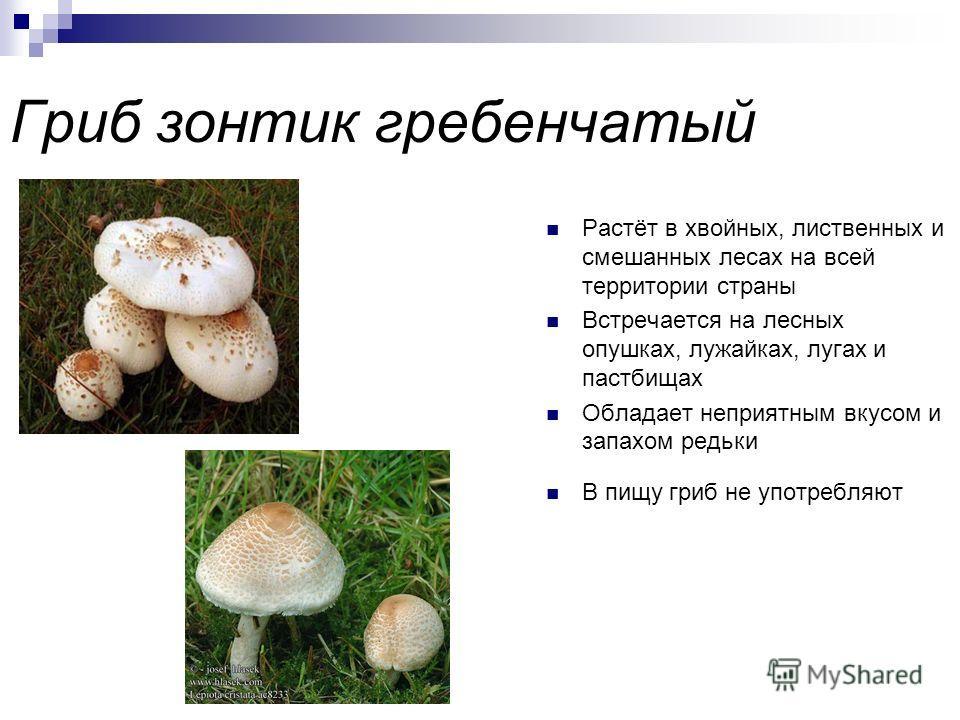 Валуй ложный или хреновый гриб Из-за запаха получил второе название – хреновый гриб Растёт на опушках лиственных и хвойных лесов, а также встречается в парках и вдоль дорог Любит богатую почву Из-за вкуса непригоден к употреблению в пищу