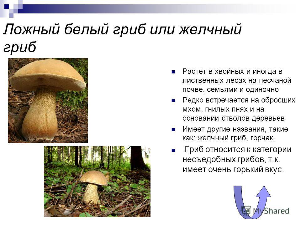 Перечный гриб или масленок перечный Растёт в хвойных и лиственных лесах, предпочитает сухие места, подстилку и траву Встречается одиночно, иногда небольшими семьями Причислен к категории несъедобных грибов из-за своего перечного вкуса Гриб похож на м