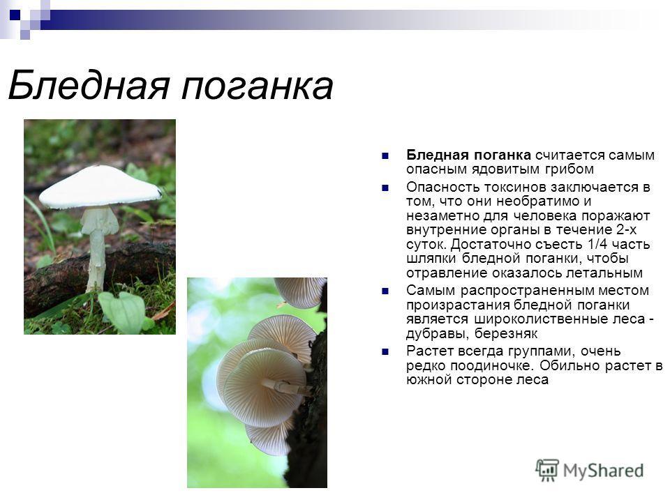 Ядовитые грибы Содержат в своем составе смертельно опасные токсины. Поэтому употреблять их в пищу категорически запрещено! Одним из положительных моментов в жизни ядовитых грибов является то, что численность их видов сравнительно невелика и составляе