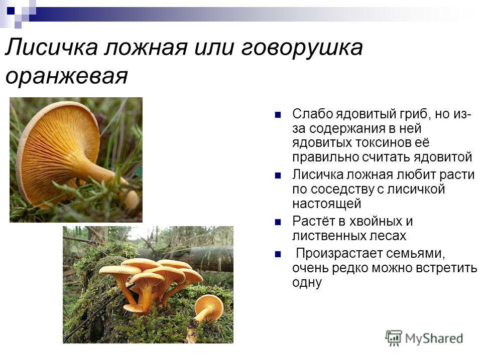 Бледная поганка Бледная поганка считается самым опасным ядовитым грибом Опасность токсинов заключается в том, что они необратимо и незаметно для человека поражают внутренние органы в течение 2-х суток. Достаточно съесть 1/4 часть шляпки бледной поган