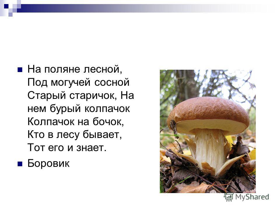 Шоколадно-бурый гриб, К скользкой шляпке лист прилип. Воротник ажурный тонок - Гриб такой зовут... Маслёнок