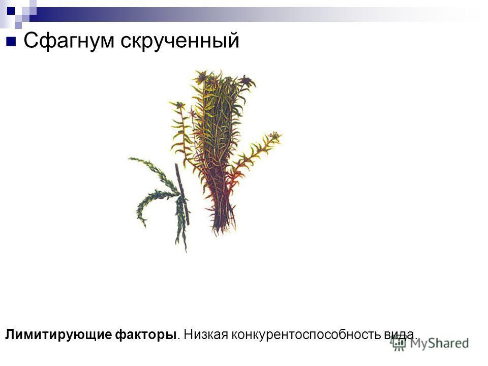Растения Можжевельник казацкий Лимитирующие факторы. Степные пожары, выпас скота, человеческое воздействие.