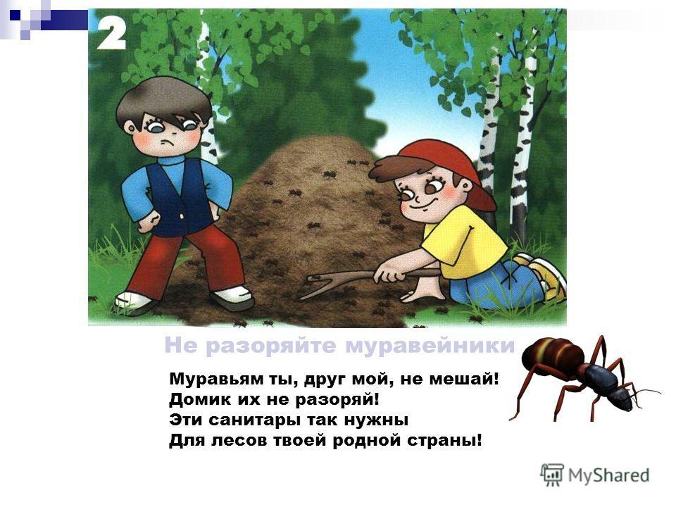 Не разоряйте птичьи гнёзда Дети запомнить должны И понять: Гнёзда у птичек Нельзя разорять!