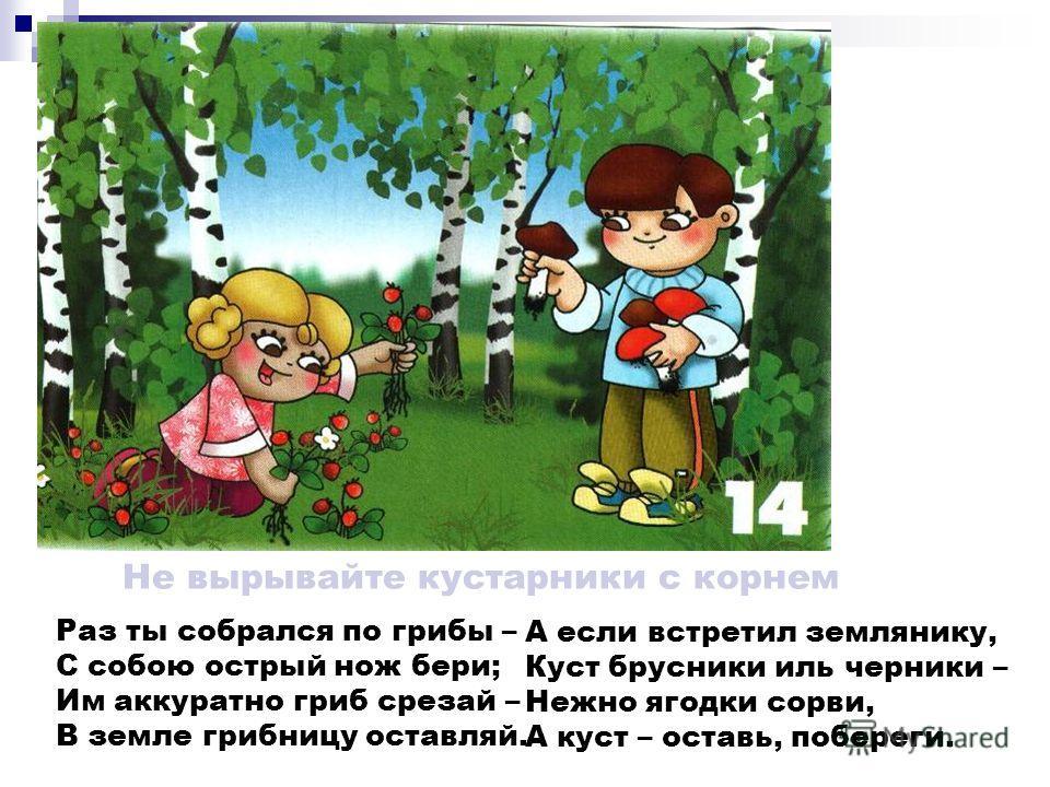 Не портите несъедобные грибы В лесу грибов различных много, Ты несъедобные не трогай! В корзинку их не собирай, Но и ногами не сбивай… Нужны они лесным зверятам: Лисичкам, ёжикам, зайчатам. Их только люди не едят: В поганках, мухоморах – яд! Но для з