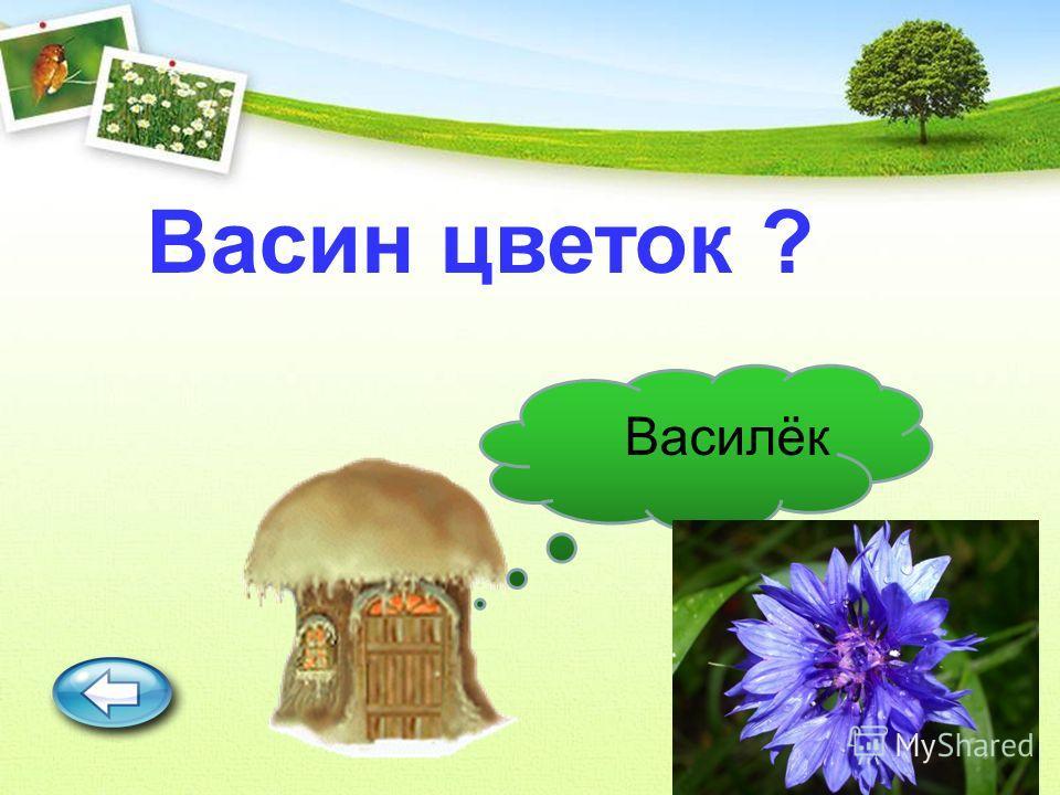 Васин цветок ? Василёк