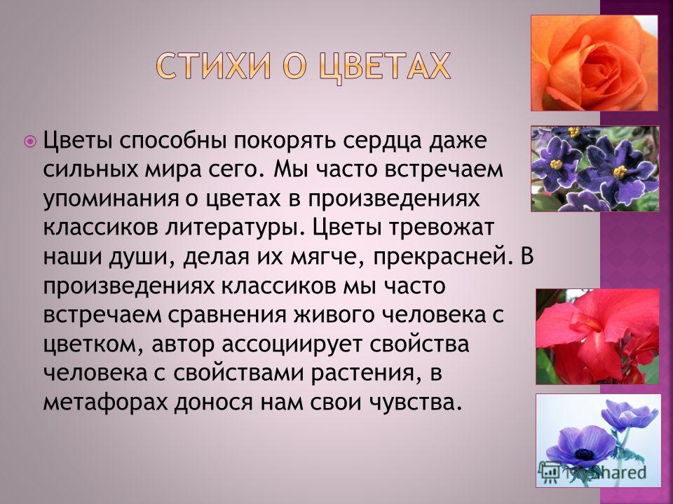 Цветы способны покорять сердца даже сильных мира сего. Мы часто встречаем упоминания о цветах в произведениях классиков литературы. Цветы тревожат наши души, делая их мягче, прекрасней. В произведениях классиков мы часто встречаем сравнения живого че