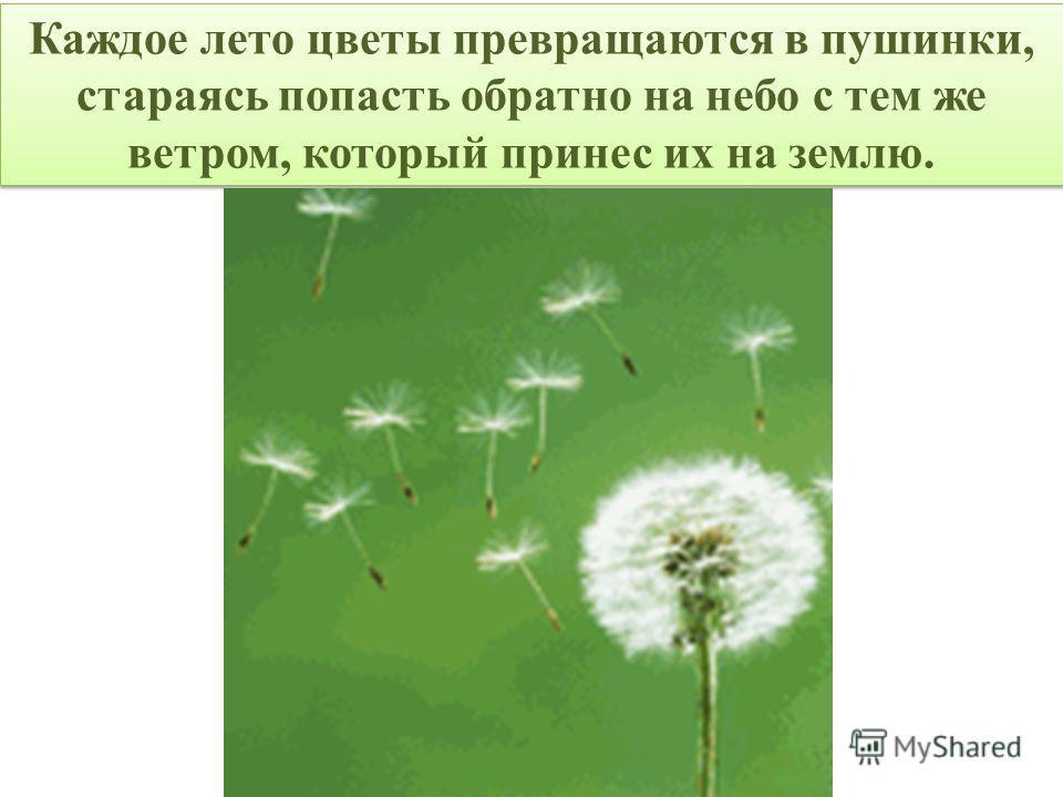 Каждое лето цветы превращаются в пушинки, стараясь попасть обратно на небо с тем же ветром, который принес их на землю.